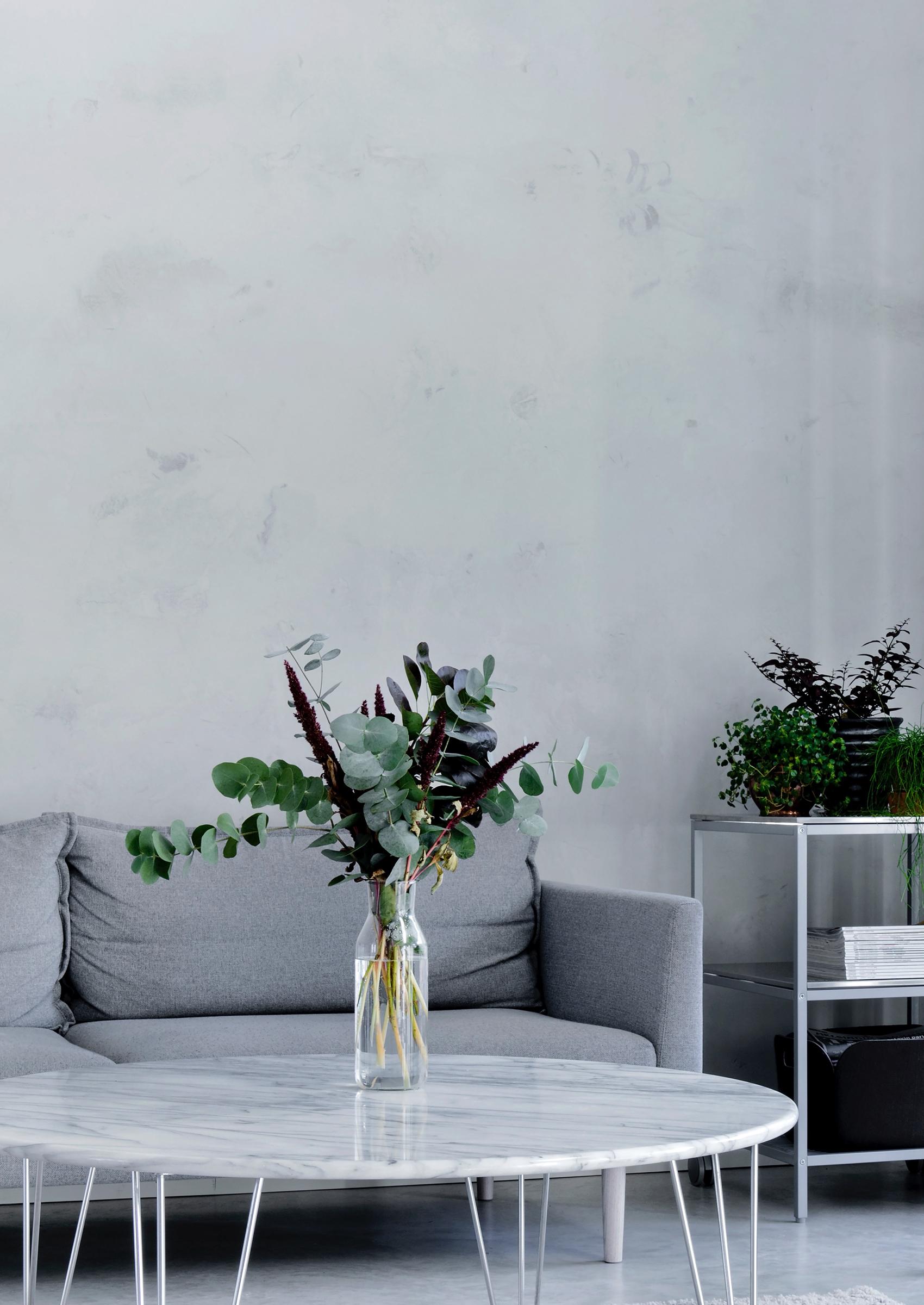 eucalyptus kasvi