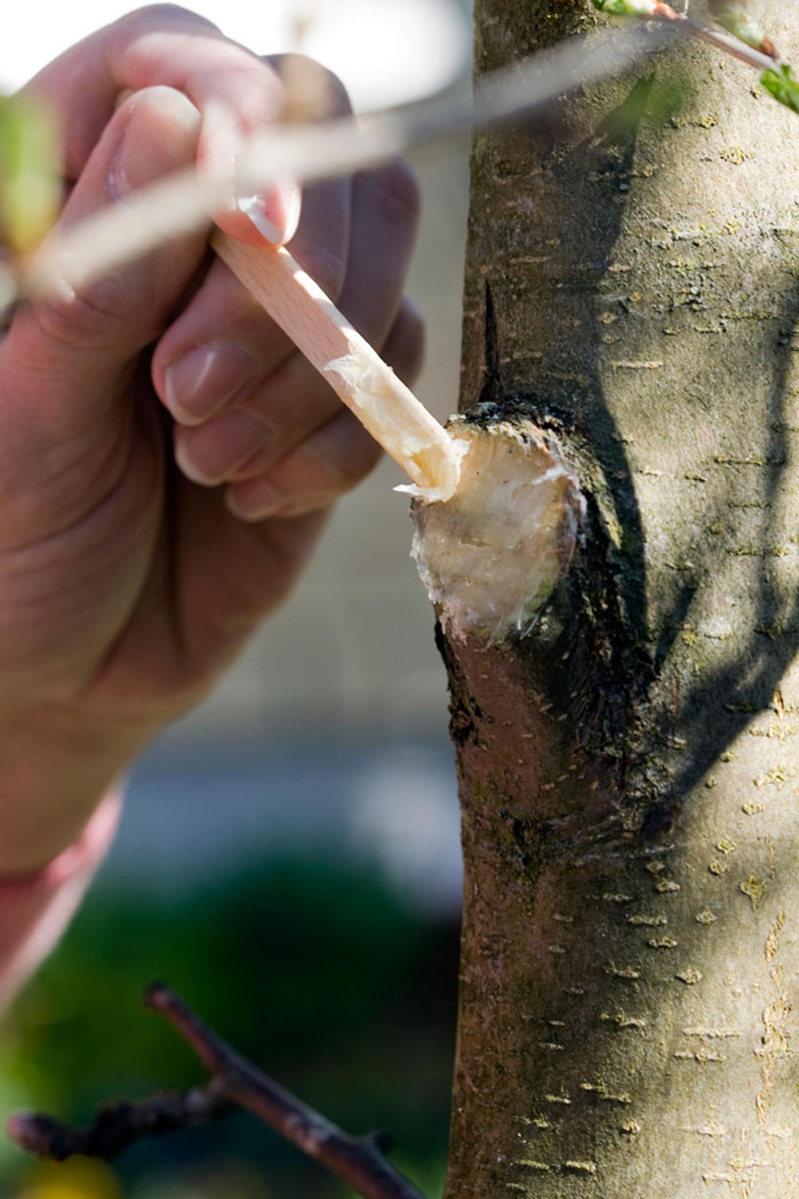 Puun Haavasuoja